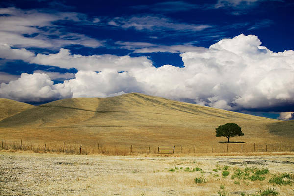 Ca Photograph - When You Walk My Way by Laurie Search