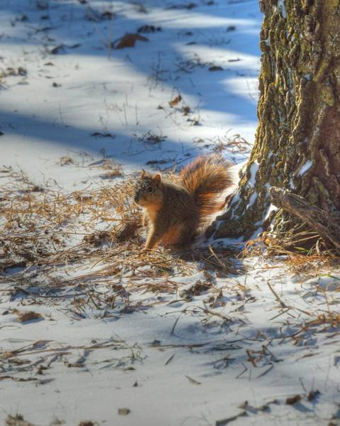 Photograph - Where Are My Nuts 1 by Dimitry Papkov
