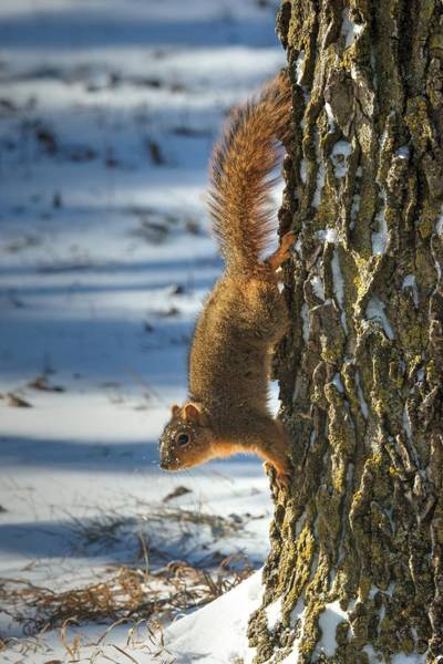 Photograph - Where Are My Nuts 2 by Dimitry Papkov