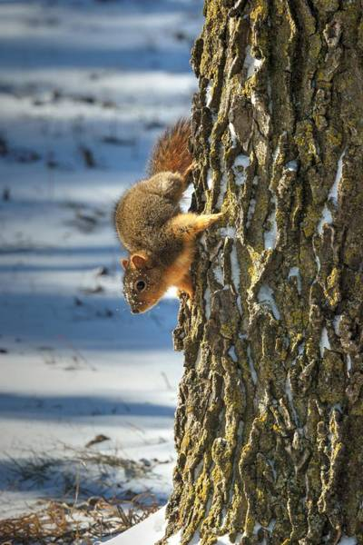 Photograph - Where Are My Nuts 3 by Dimitry Papkov