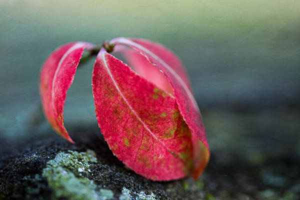 Photograph - Where Autumn Leaves Fall by Dale Kincaid