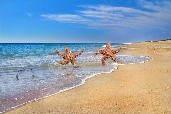 Sea View Digital Art - Where Stars Are Born by Betsy Knapp