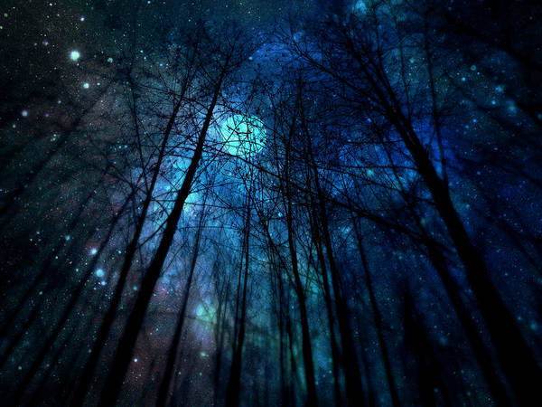 Photograph - Where The Faeries Meet by Micki Findlay