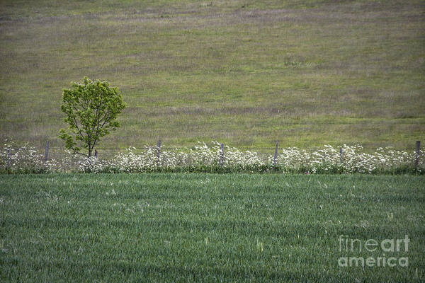 Wall Art - Photograph - Where The Grass Is Greener by Evelina Kremsdorf