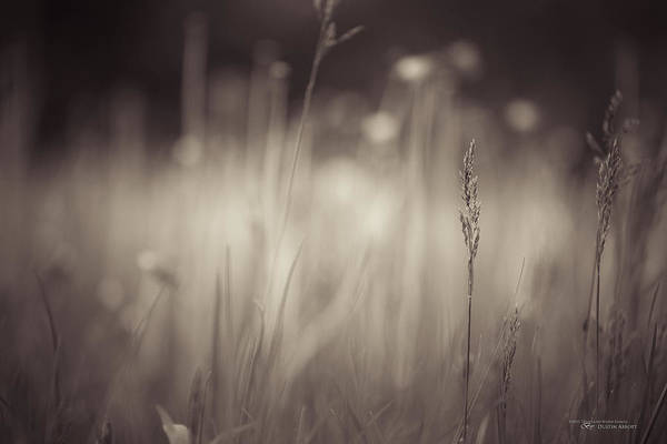 Earthtones Photograph - Where The Long Grass Blows by Dustin Abbott