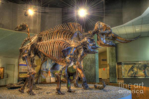 Photograph - Where's Dino? by Mathias