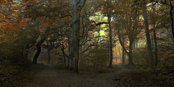 Woods Photograph - Which Path by Leif L?ndal