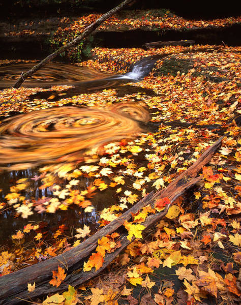 Photograph - Whirlpool Of Leaves by Ray Mathis