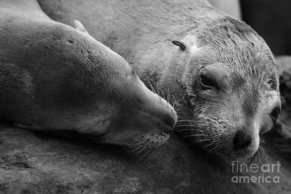 Photograph - Whisker Love by John F Tsumas