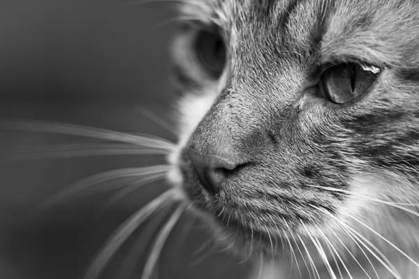 Wall Art - Photograph - Whiskers by Chris Whittle