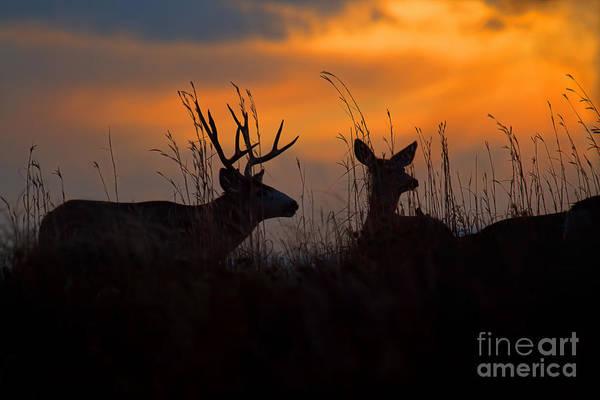 Photograph - Whisper by Jim Garrison