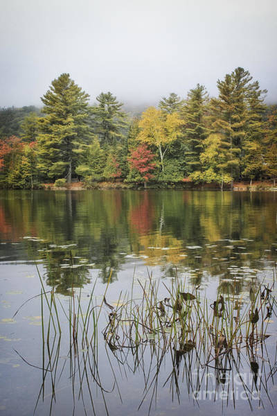 Upstate Ny Photograph - Whispers In The Mist by Evelina Kremsdorf