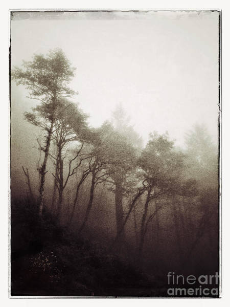 Iphoneography Wall Art - Photograph - Whispers In The Mist by Venetta Archer