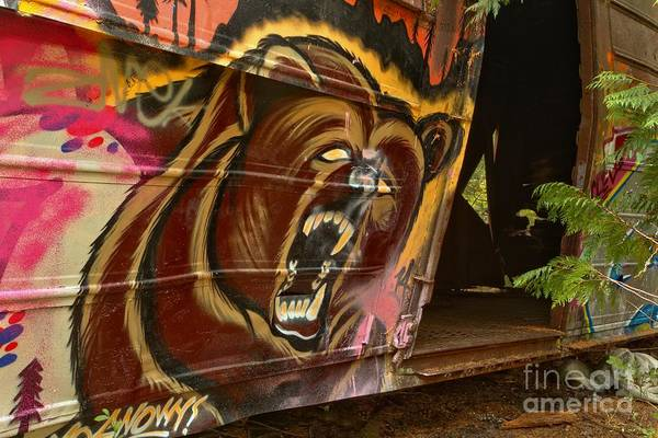 Photograph - Whistler Train Wreck Grizzly Bear by Adam Jewell