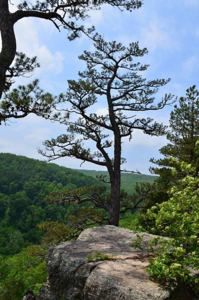 Photograph - Whitaker Point Trail by Laureen Murtha Menzl
