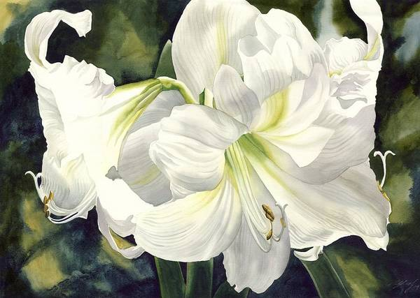 Painting - White Amarylilis by Alfred Ng