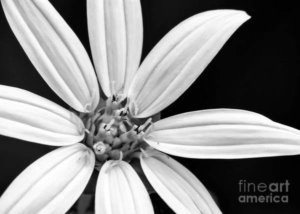 Photograph - White And Black Flower Close Up by Sabrina L Ryan