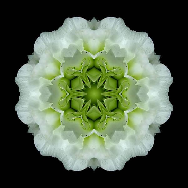 Photograph - White And Green Begonia Flower Mandala by David J Bookbinder