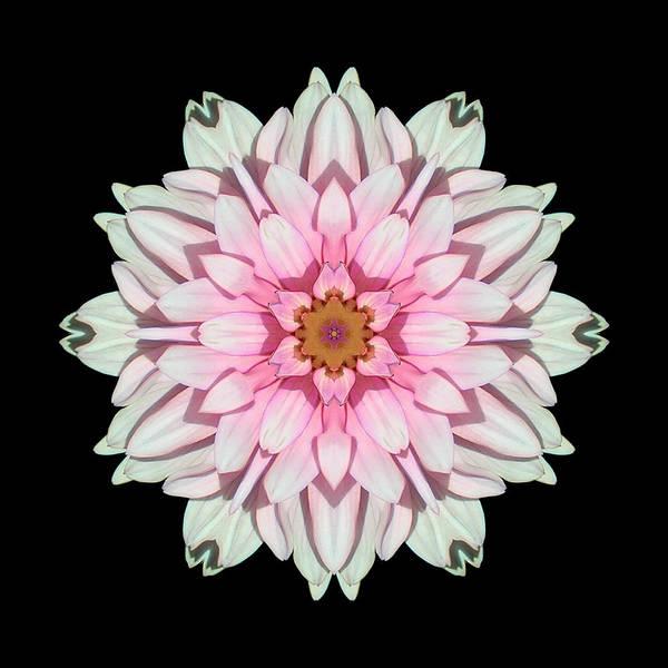 Photograph - White And Pink Dahlia I Flower Mandala by David J Bookbinder