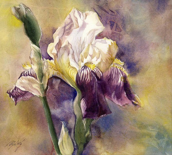 Painting - White And Purple Iris by Alfred Ng