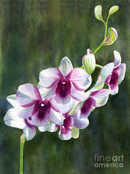 Violet Painting - White And Red Violet Orchid by Sharon Freeman