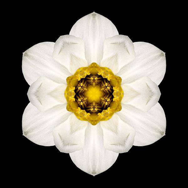 Photograph - White And Yellow Daffodil Flower Mandala by David J Bookbinder