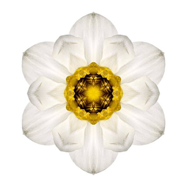 Photograph - White And Yellow Daffodil I Flower Mandala White by David J Bookbinder