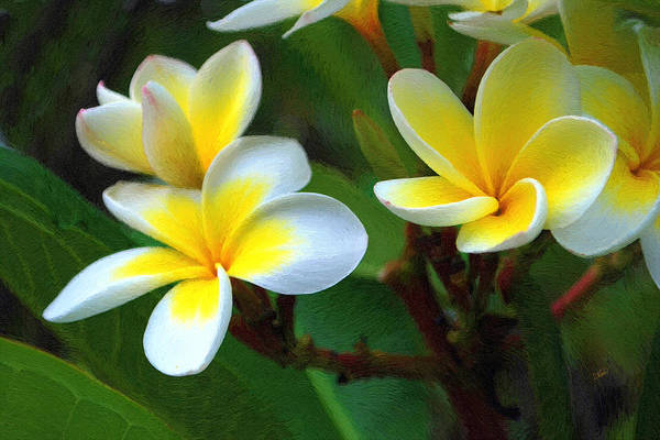 Painting - White And Yellow Frangipani 001 by Dean Wittle