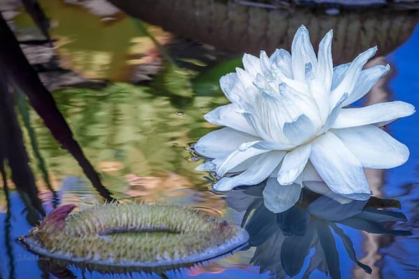 Photograph - White Aquatic Bloom by Julie Palencia