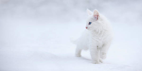 Kitten Wall Art - Photograph - White As Snow by Esm?e Prexus