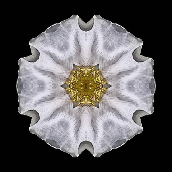Photograph - White Beach Rose I Flower Mandala by David J Bookbinder