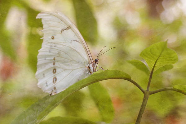 Photograph - White Beauty by Kim Hojnacki