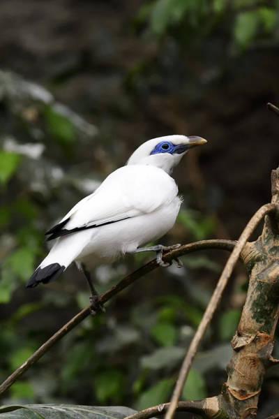 Photograph - White Bird by Goyo Ambrosio