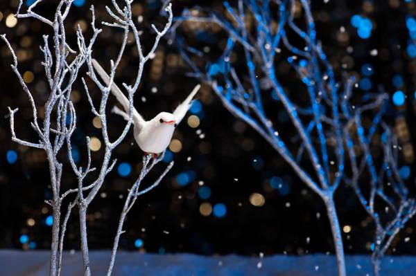 Photograph - White Bird In Winter by U Schade