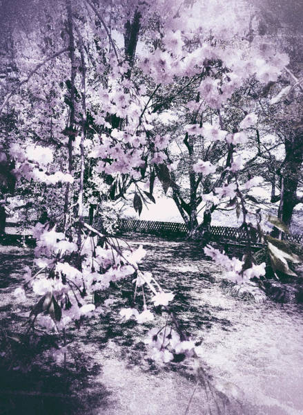 Photograph - White Blossoms by Yen