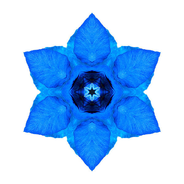 Photograph - Blue Pansy II Flower Mandala White by David J Bookbinder