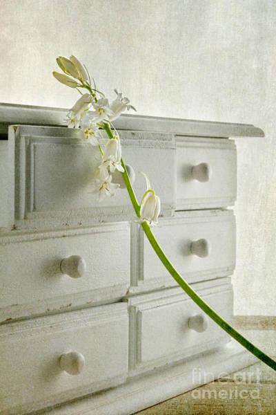 Chest Of Drawers Photograph - White Bluebell by Ann Garrett