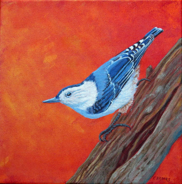 Painting - White-breasted Nuthatch by Fran Brooks