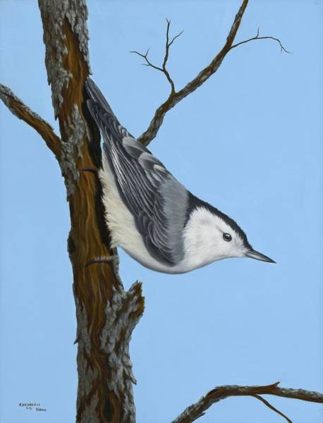 Wall Art - Painting - White Breasted Nuthatch by Rick Bainbridge
