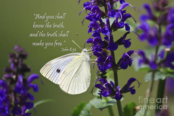 Photograph - White Butterfly With Scripture by Jill Lang