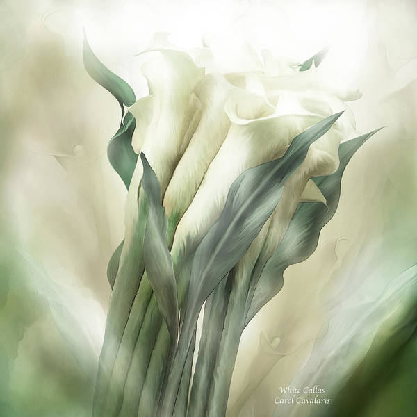 Calla Mixed Media - White Callas by Carol Cavalaris