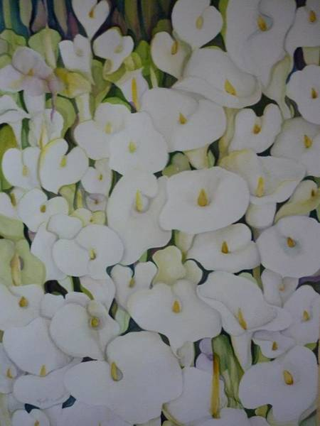 Wall Art - Painting - White Callas by Margaret Pirrouette
