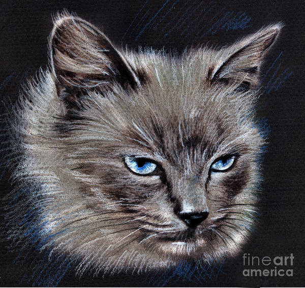 Drawing - White Cat Portrait by Daliana Pacuraru