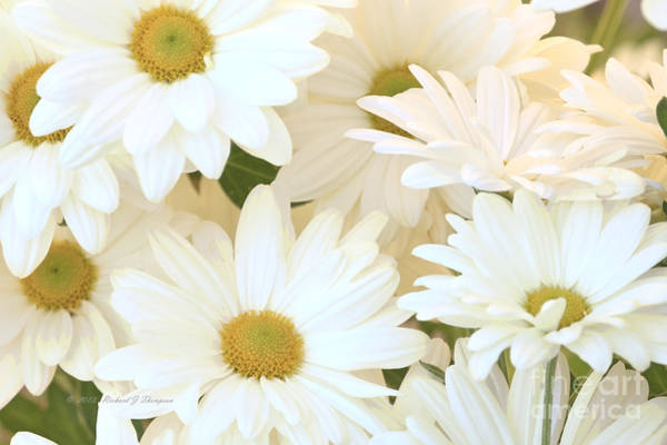 Photograph - White Chrysanthemums by Richard J Thompson