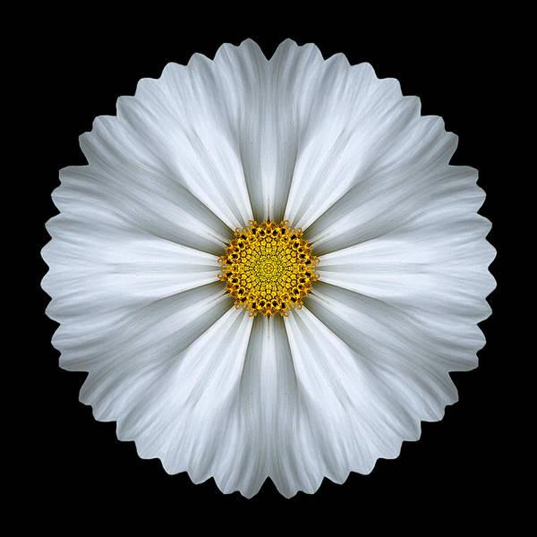 Photograph - White Cosmos Flower Mandala by David J Bookbinder