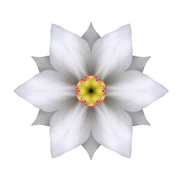 Photograph - White Daffodil II Flower Mandala White by David J Bookbinder