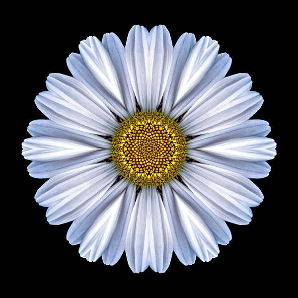 Photograph - White Daisy Flower Mandala by David J Bookbinder