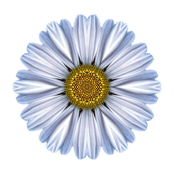 Photograph - White Daisy I Flower Mandala White by David J Bookbinder