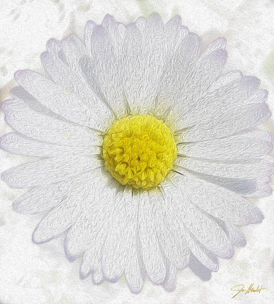 Wild Life Mixed Media - White Daisy On White by Jon Neidert