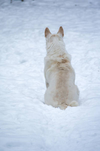 Photograph - White Dog Waiting For Squirrels by Guy Whiteley
